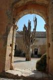 Alter Baum durch einen Torbogen Stockbilder