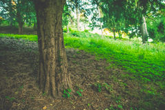 Alter Baum in einem Garten Stockfoto
