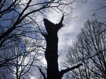 Alter Baum gegen den bewölkten Himmel Stockfotos