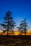 Alter Baum gegen den Himmel Stockfotos