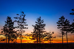 Alter Baum gegen den Himmel Stockbild