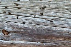 Alter Baum hölzernes Brett in den Termiten Beschaffenheit stockbilder