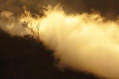 Alter Baum im Nebel Lizenzfreie Stockfotografie