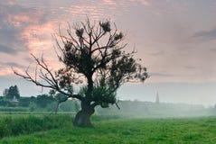Alter Baum im Nebel am Sonnenuntergang und an den Wolken Stockfotografie