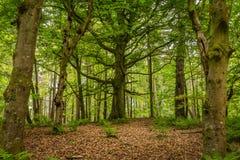 Alter Baum im Wald Lizenzfreie Stockfotos