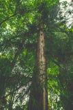 Alter Baum im Wald Stockfotografie