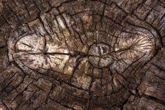 Alter Baum mit einem Rundschreiben von den Sprüngen Beschaffenheit eines alten Baums Lizenzfreies Stockbild