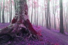 Alter Baum mit großen Wurzeln den Märchenwaldim roten Moos und -blättern Stockfotografie
