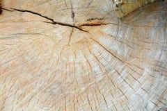 Alter Baum mit Jahresringen Lizenzfreie Stockbilder