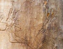 Alter Baum mit natürlichem Muster von Sprüngen Lizenzfreie Stockfotografie