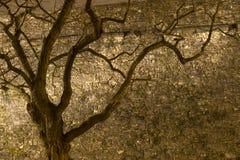 Alter Baum nahe Schloss Lizenzfreies Stockbild