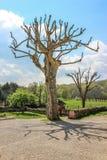 Alter Baum, Nespouls, Correze, Limousin, Frankreich Lizenzfreie Stockfotografie