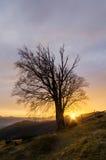 Alter Baum und die untergehende Sonne im Bergdorf Stockfotografie