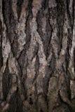 Alter Baumrindeabschluß oben mit Moos auf ihm Stockfotografie