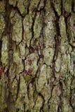 Alter Baumrindedetail-Beschaffenheitshintergrund Stockbild