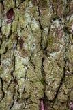 Alter Baumrindedetail-Beschaffenheitshintergrund Lizenzfreies Stockbild