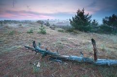 Alter Baumstamm auf Düne bei Sonnenaufgang Stockfotos