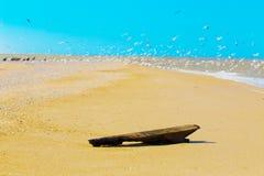 Alter Baumstamm auf einem Seestrand Stockfotografie