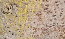 Alter Baumstammhintergrund Stockbilder