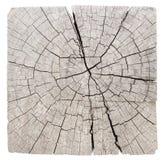 Alter Baumstumpf Stockfotografie