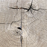 Alter Baumstumpf Lizenzfreie Stockfotografie