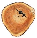 Alter Baumstumpf Lizenzfreie Stockfotos