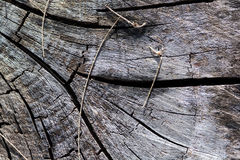 Alter Baumstumpf Lizenzfreies Stockbild