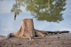 Alter Baumstumpf Stockbild