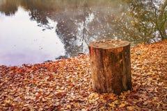 Alter Baumstumpf auf der Flussbank im Herbst Lizenzfreie Stockbilder