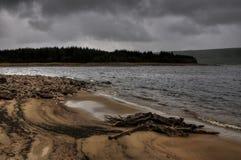 Alter Baumstumpf auf lake´s sandigem Strand Stockfotos