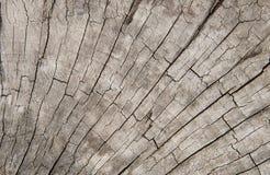 Alter Baumstumpf-Beschaffenheitshintergrund Lizenzfreies Stockbild
