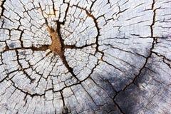 Alter Baumstumpf-Beschaffenheitshintergrund Lizenzfreies Stockfoto
