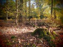 Alter Baumstumpf in einem wilden und romantischen forrest stockbilder