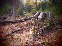 Alter Baumstumpf in einem wilden und romantischen forrest lizenzfreies stockbild