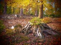 Alter Baumstumpf in einem wilden und romantischen forrest lizenzfreie stockfotografie