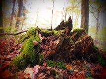 Alter Baumstumpf in einem wilden und romantischen forrest stockbild
