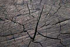 Alter Baumstumpf mit trockenen Blättern stockbilder