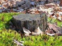 Alter Baumstumpf umgeben durch Moos Lizenzfreie Stockfotos