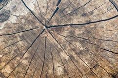 Alter Baumstumpfhintergrund, verwitterte hölzerne Beschaffenheit mit dem Querschnitt eines Schnittklotzes Lizenzfreies Stockfoto