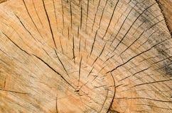 Alter Baumstumpfhintergrund, verwitterte hölzerne Beschaffenheit mit dem Querschnitt eines Schnittklotzes Lizenzfreies Stockbild