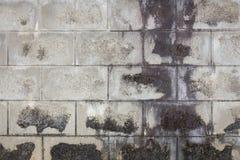 Alter Betonblockwandhintergrund Stockbilder