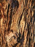 Alter bewaldeter Baumklotz der Hintergrund-Beschaffenheit von einem Wald Stockfoto