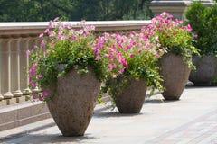 Alter Blumentopf mit Verzierung und flowe Lizenzfreies Stockfoto