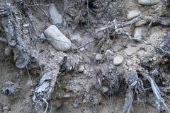 Alter Boden mit Steinen und Pflanzenwurzeln Lizenzfreies Stockbild