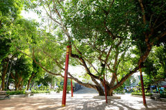Alter Bohhi-Baum bei Suphanburi stockbild