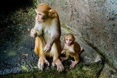 Alter brauner Affe und Sohn Stockfotos