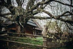 Alter Bretterzaun nahe Apfelbaum im russischen Dorf, rustikales fenc Lizenzfreies Stockbild