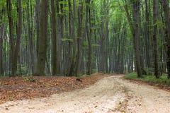 Alter Buchenwald im Herbst Stockfoto