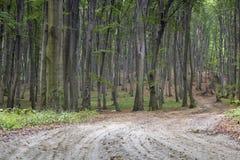 Alter Buchenwald im Herbst Lizenzfreies Stockfoto