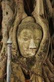 Alter Buddha in Ayutthaya-Provinz von Thailand stockfotografie